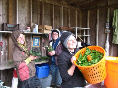 Apprentices Lauren, Cait and Felicia getting the veg ready.