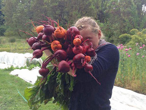 Farm apprentice and a large bunch of beautiful beets