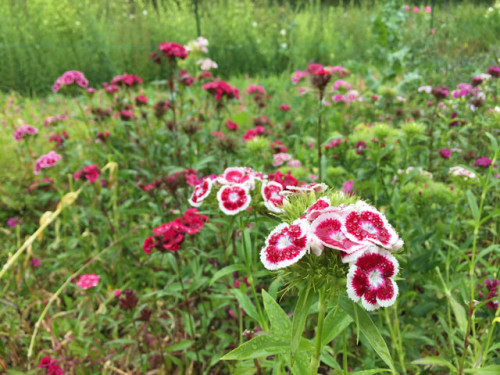 spring-flowers-640-LN