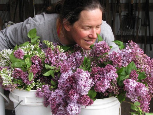 Louisa and fragrant lilacs