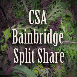 Bainbridge Island Split Share