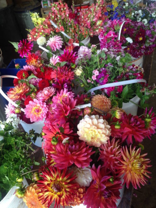 Freshly harvested flowers ready for bouquet making lesson