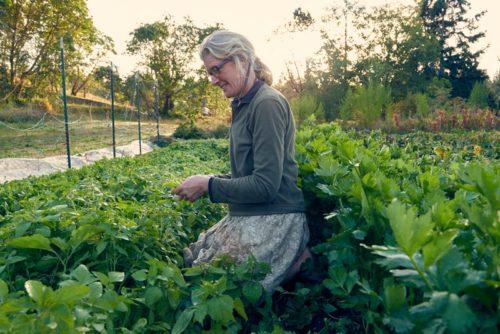 Female farmer tending the crops