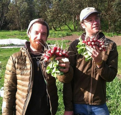 Farmers with freshly harvested radishes