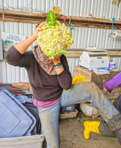 Farm intern with a huge cauliflower