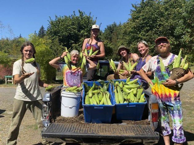 Persephone Farm Interns 2020, CSA