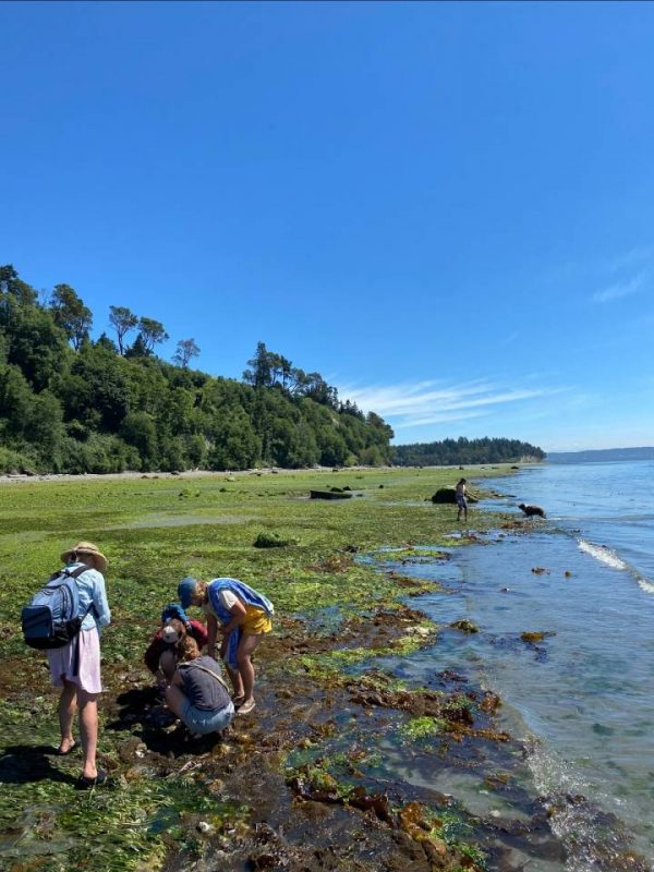 low tide excursion for farm interns on Indianola Beach